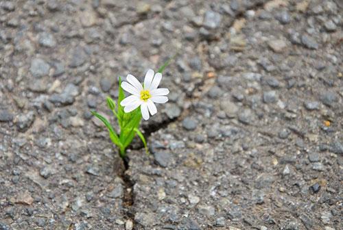 Resilience - Fear