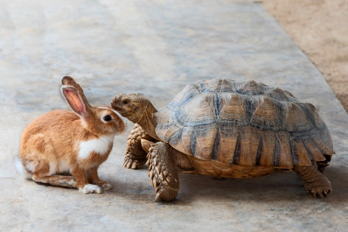 image of a tortoise and a hare to signify two approaches to getting results you want